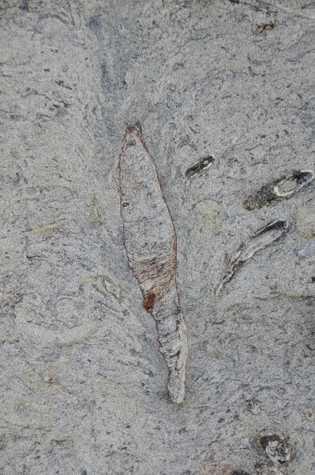 Fotografía de la galería fosilizada hallada en Taiwán