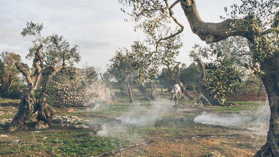 La región de Salento, el tacón de la bota de Italia, es famosa por su aceite ...