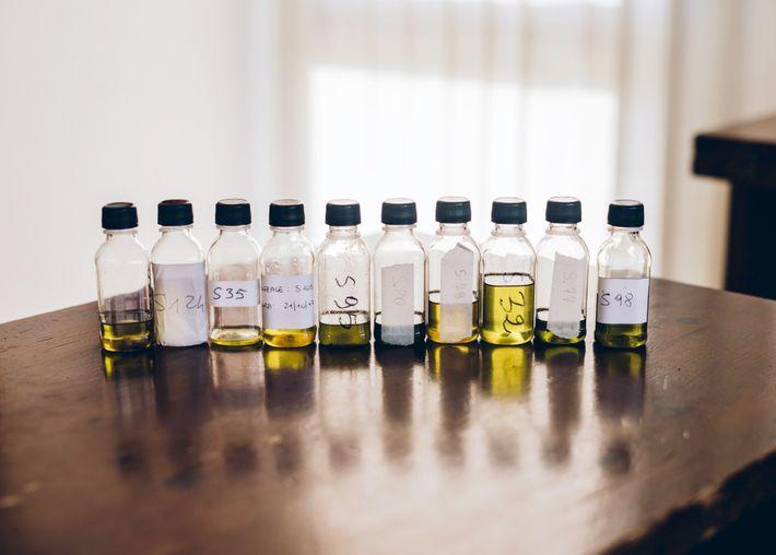 Científicos y agricultores intentan encontrar cultivares de olivos resistentes a la devastadora Xylella para poder remplazar ...