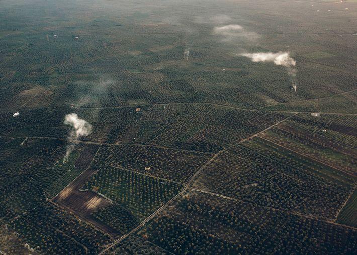 La Xylella no ha afectado a la mayoría de los olivares cerca de Bari. Pero ¿sobrevivirán ...