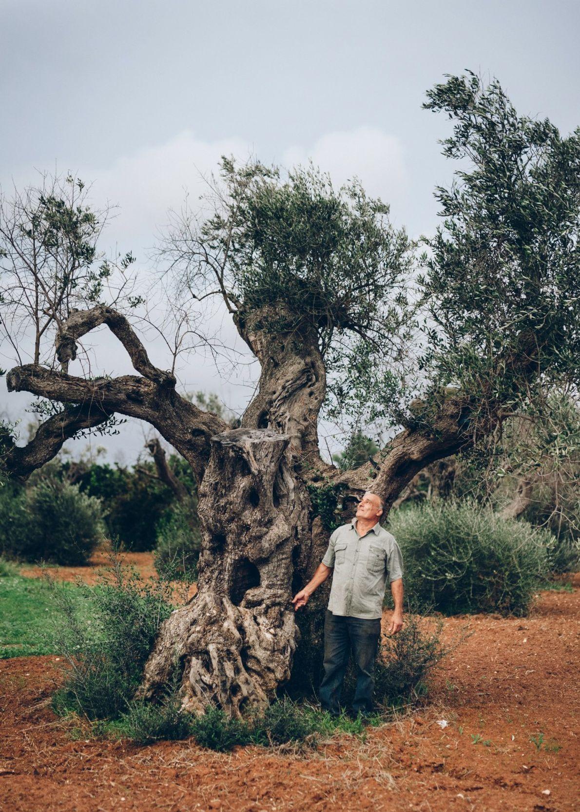 Cosimino de Luca fue una de las primeras personas que observó las hojas marrones y marchitas ...
