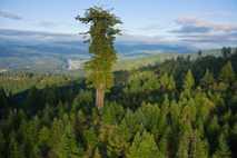 Parque estatal Humboldt Redwoods