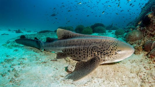 Tiburones extraordinarios