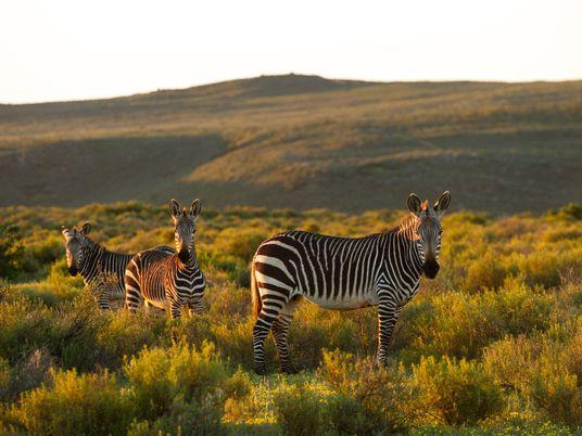 Estos hoteles africanos son líderes en la conservación de fauna silvestre
