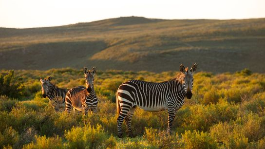 Bushmans Kloof, Sudáfrica